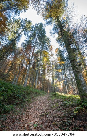 Black Forest at autumn, Germany - stock photo