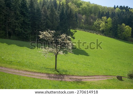 Black Forest, Germany - stock photo