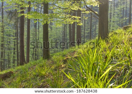 Black Forest in spring, Germany - stock photo