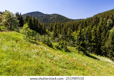 Black Forest near Lake Titisee, Germany - stock photo