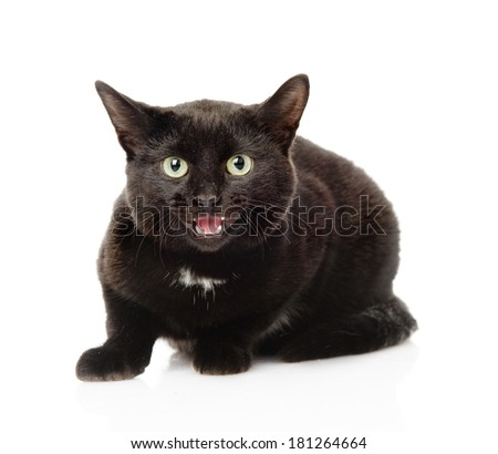 Black frightened cat. Isolated on white background - stock photo