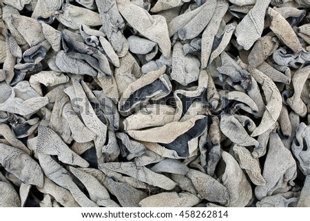 black fungus background - stock photo