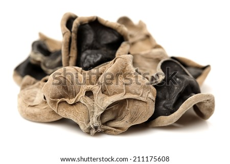 black fungus on white background - stock photo