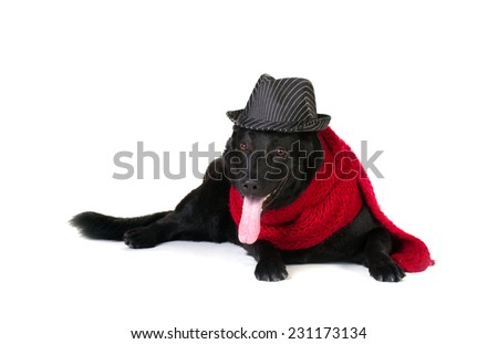 black german shepherd in fashion hat and long red wool muffler isolated on white  - stock photo