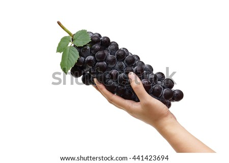 Black grapes. Hand holding a big bunch of fresh black grapes - stock photo