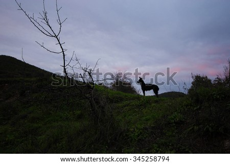 Black guard dog watching something with dramatic sky and a dead tree in the evening - stock photo
