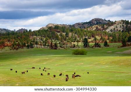 Black Hills - stock photo