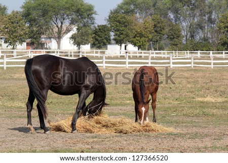 black horse and brown foal eat hay - stock photo