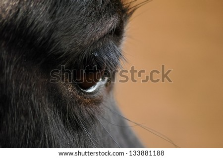 Black horse brown eye on brown background - stock photo
