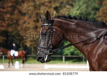 Black horse close up during dressage show