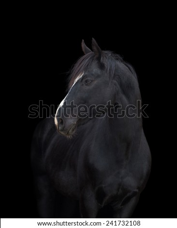 Black horse head on black background, isolated.