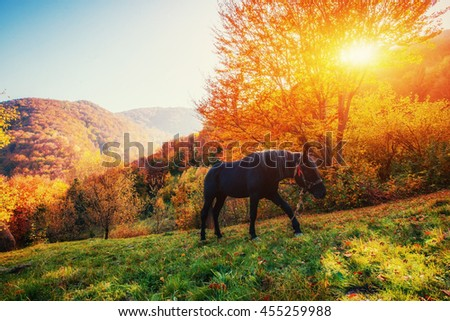 Black horse in mountains. Fantastic sunset and fog in the distance. Carpathians. Ukraine, Europe