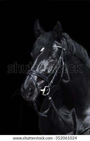 black horse on black background - stock photo