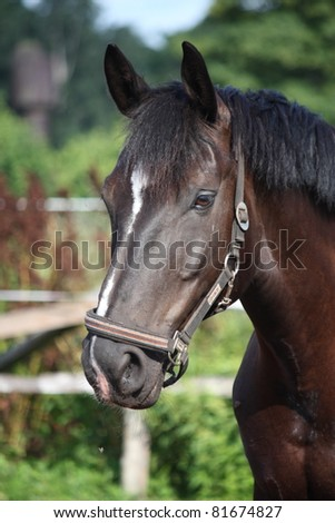Black horse portrait with white stripe
