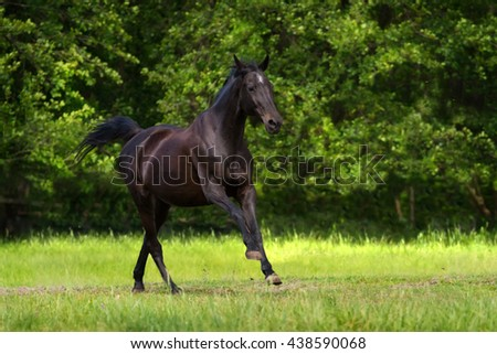 Black horse run gallop against trees in green field - stock photo