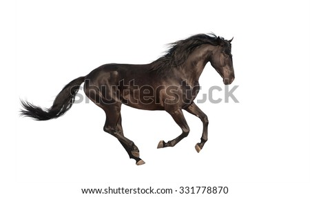 Black horse run in the white background - stock photo