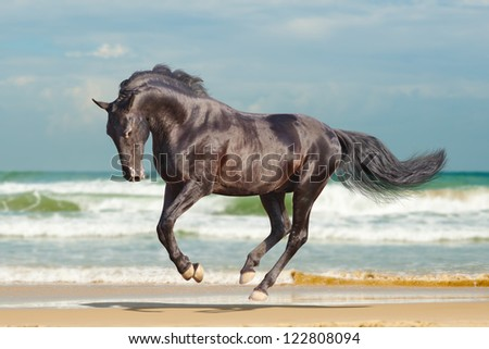 black horse running - stock photo