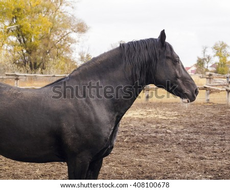 black horse standing on brown ground in the paddock on a background of yellow trees