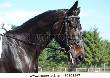 Black horse with bridle