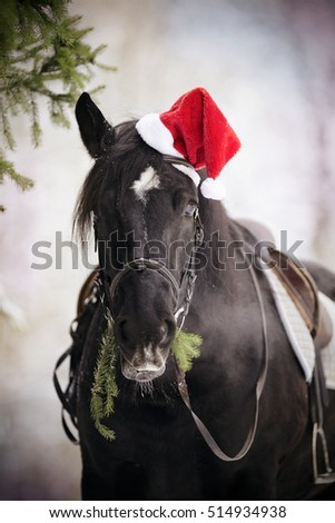 Black horse with fir-tree branches in a a red Santa Claus hat