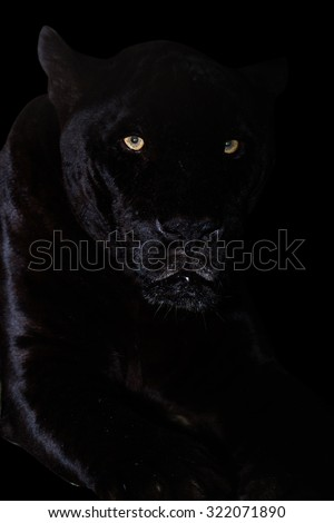 Black Jaguar in the dark - stock photo