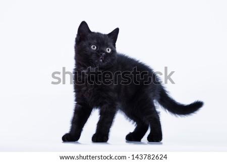 black kitten - stock photo
