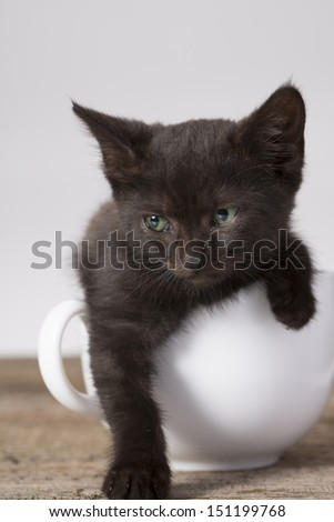 black kitten in a  white cup - stock photo