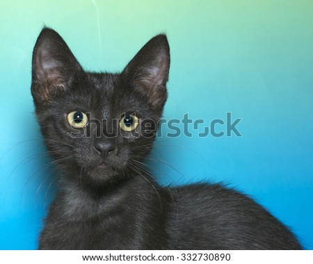 Black kitten isolated on a blue and green textured background with copy space. Kitten facing forward looking forward. - stock photo