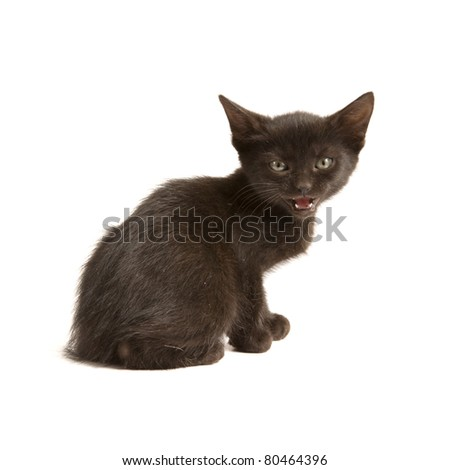 Black kitten isolated on a white background