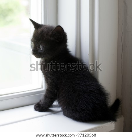 black kitten looking out the window - stock photo