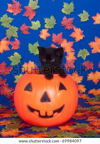 Black kitten sitting inside of plastic pumpkin with leaves as background