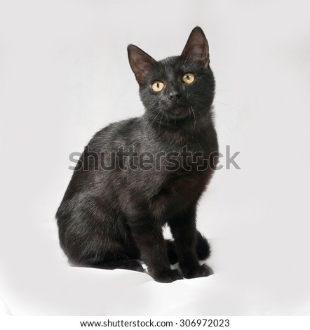 Black kitten sitting on gray background