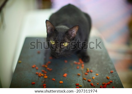 Black kitty eating they own breakfast. - stock photo