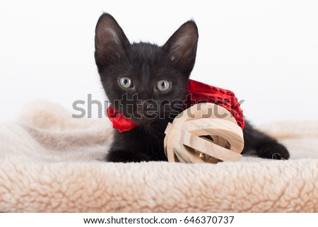 Black kitty playing with a bell ball