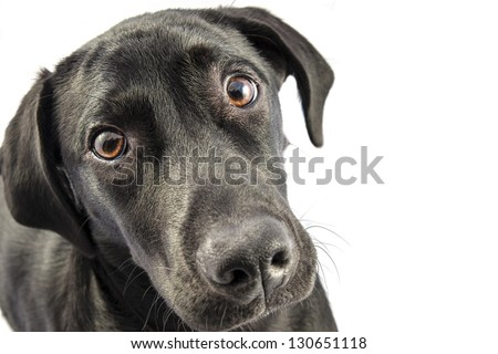 Black Labrador puppy over a white background - stock photo