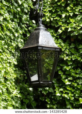 Black lamp set against a backdrop of green ivy