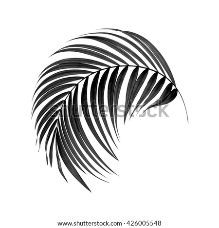black leaves of palm tree on white background