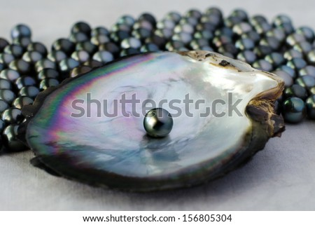 Black lip oyster shell with black pearl. Studio shot isolated on white background.