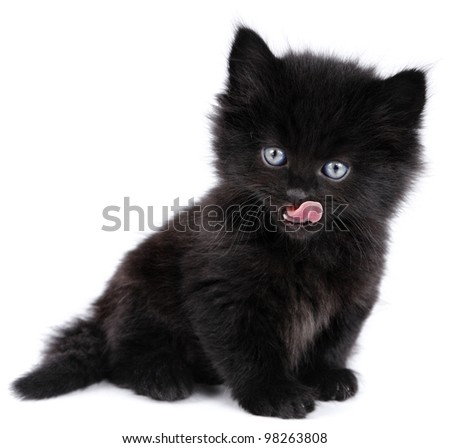 Black little kitten licking, sitting down on a white background - stock photo