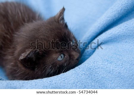 black little kitten on the sofa