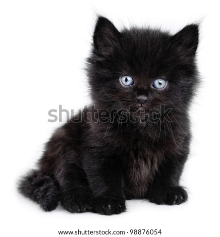 Black little kitten sitting down on a white background - stock photo