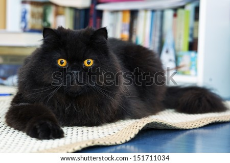 Black male cat show interest at photo camera - stock photo