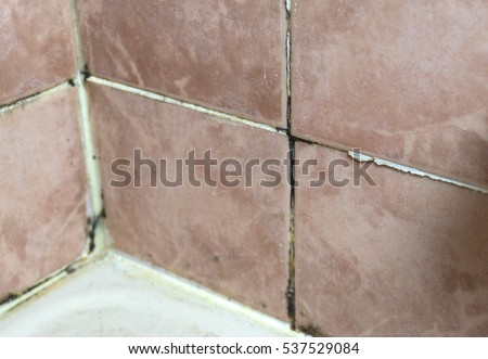 Black Mold Growing On Shower Grouted Stock Photo - Bathroom black mold