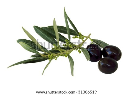 black olives with branch