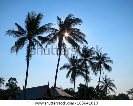 Black palms silhouettes at ooh Samui, Thailand - stock photo