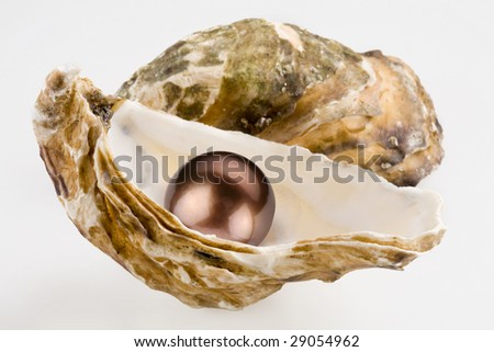 Black pearl is in a shell. - stock photo