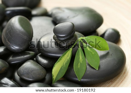 black pebbles and green leaves - beauty treatment