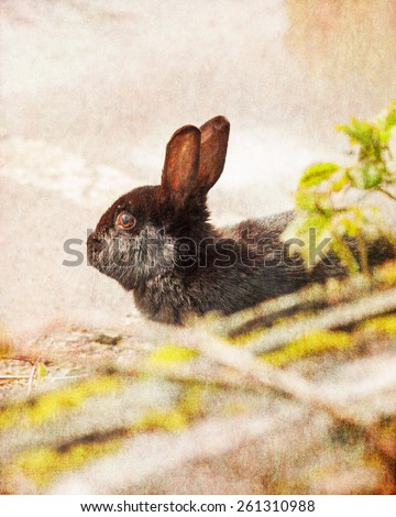 Black rabbit with retro filter effect and vintage postcard style - stock photo