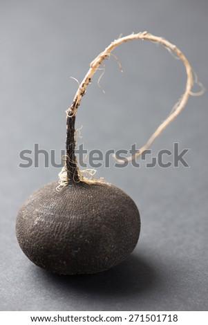 black radish isolated on grey - stock photo