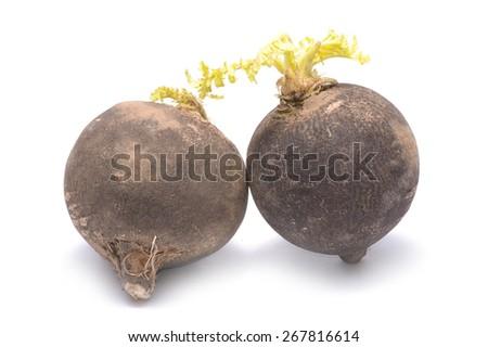 black radish isolated on white background - stock photo
